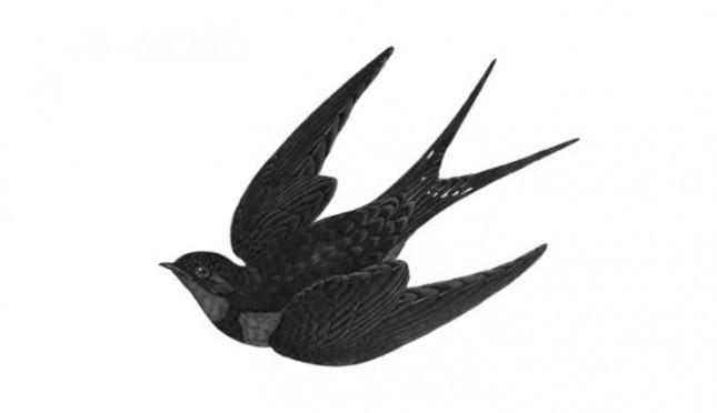 Rumah Nyaman Burung Walet